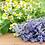Thumbnail: Lavender Chamomile 12oz.
