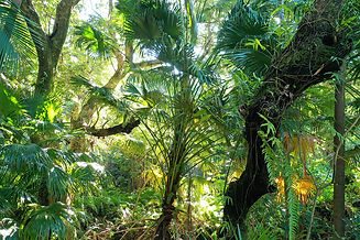 arbre_et_forêt-grand.jpg