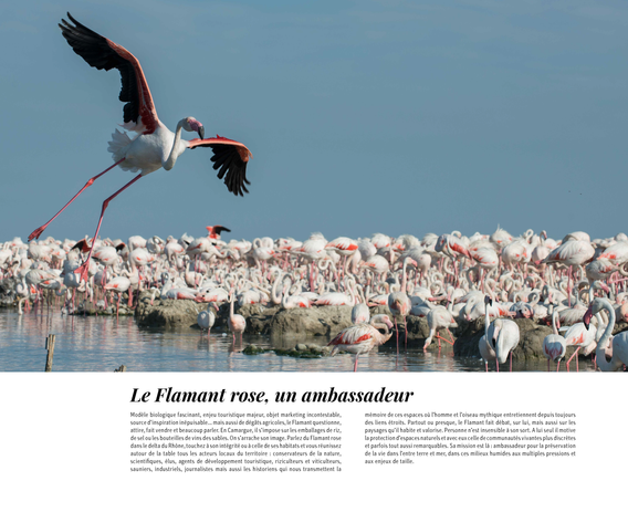 flamants-roses_170222_1-30_Page_29.png