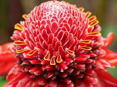 La Réunion, des plantes et des Hommes