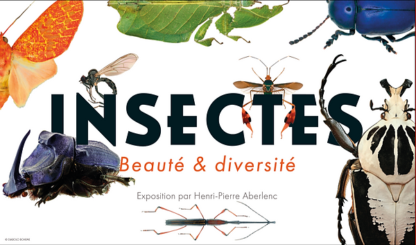 affiche DEF- Insectes.png