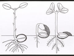 Les Plantes par Francis Hallé