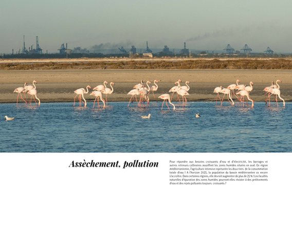 flamants-roses_170222_1-30_Page_26.png