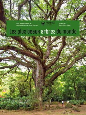 Les plus beaux arbres Monde