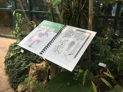 Jardin Botanique de Neuchâtel SUISSE