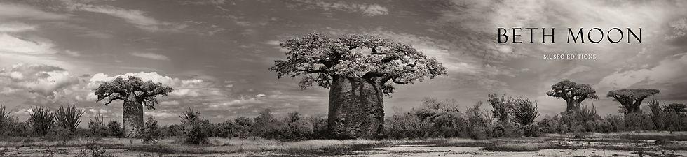Baobab_ARRIERE PLAN_.jpg