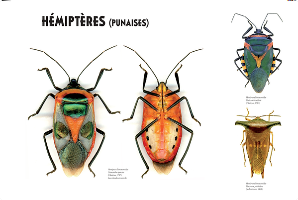 EXPO Insectes_201208_LIGHT_14.png