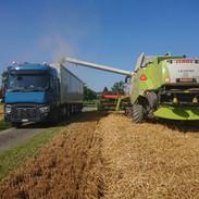 Effizienter Drusch, LKW Renault und Lexion 670TT