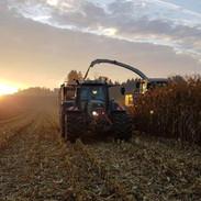 Maiskolbenschrot beim Sonnenaufgang