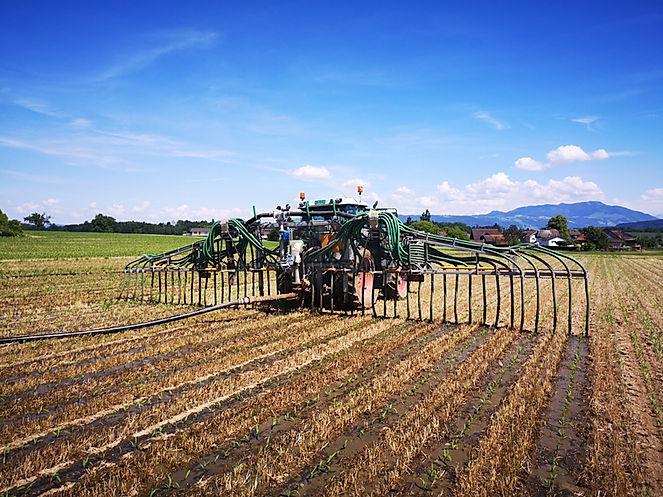 Maisgüllen mit Spezialspur am Traktor