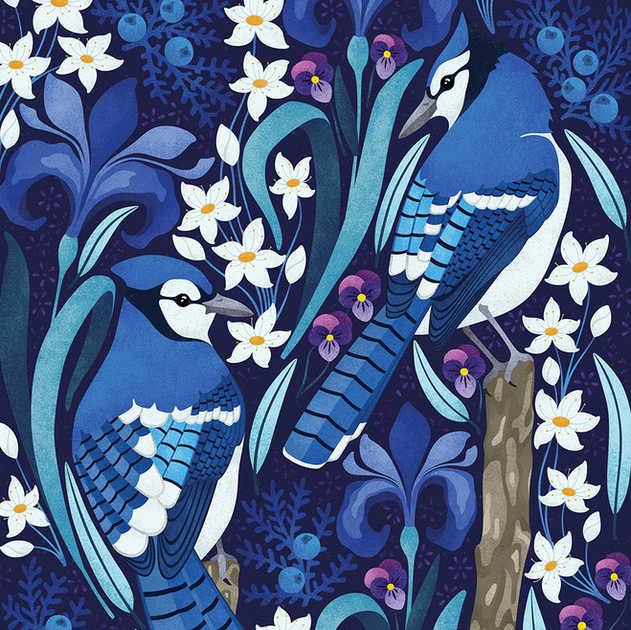 CANADIAN BLUE JAYS ILLUSTRATION