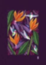 Hummingbirds_Full.jpg