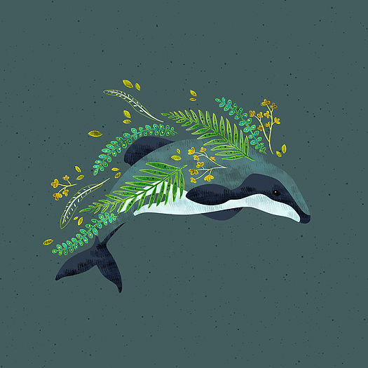 Hector Dolphin_Reduced.jpg