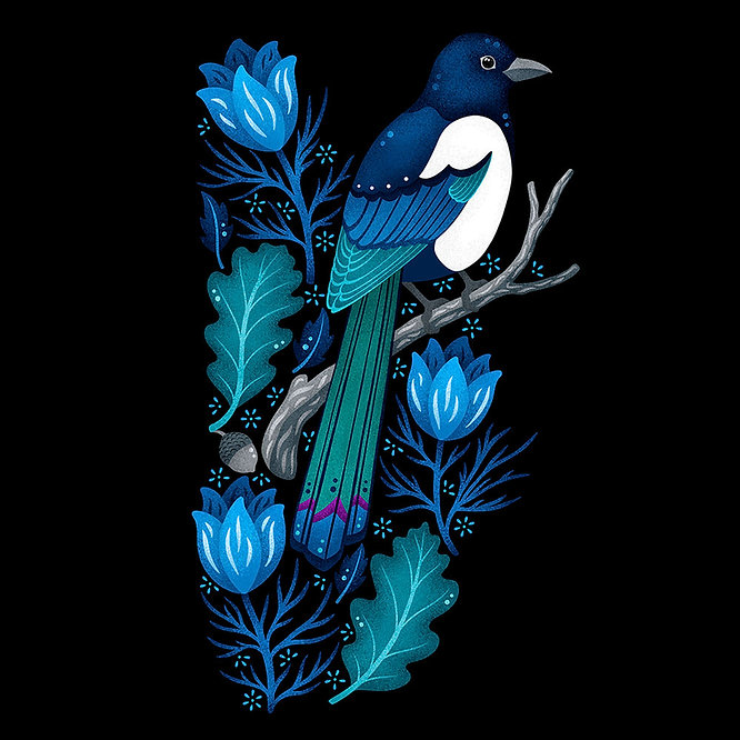European-Magpie_black-Bg.jpg