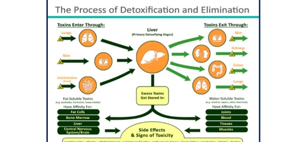 Detoxificatie voor paramedici