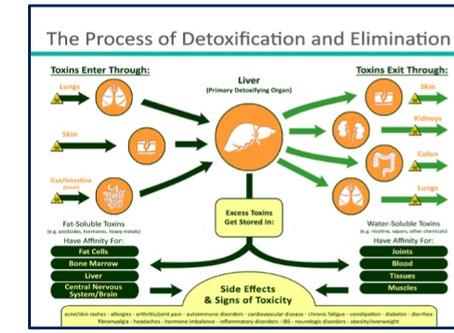 Cursus detoxificatie