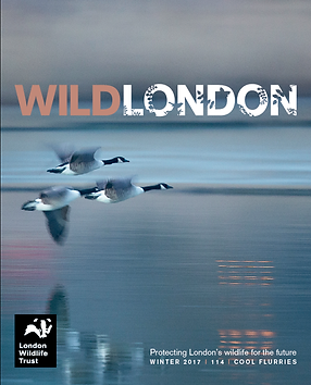 Wid London cover