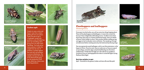 Insectinside spread