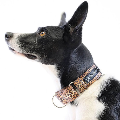 Martingale Collar - Leopard