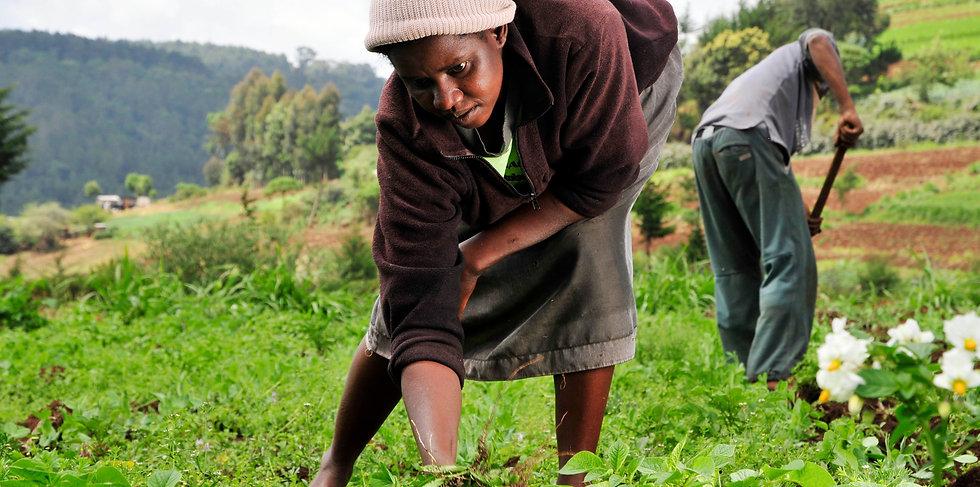 Woman_farmer_in_Kenya.jpg