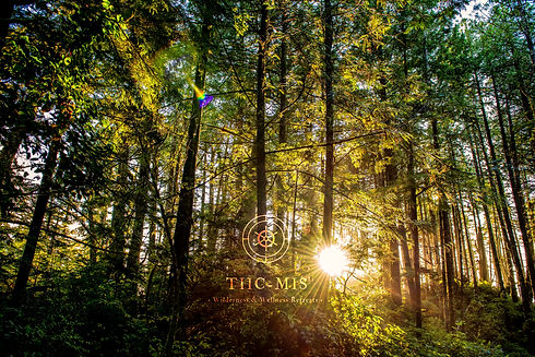 Tiicmis sunlight in the forest.jpg