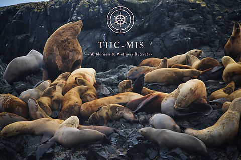 Tiicmis & the SeaLions pc.jpg