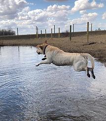 Teeka Farm Dive.jpg