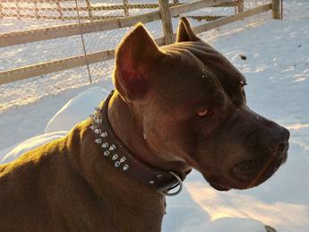 browndog.PNG