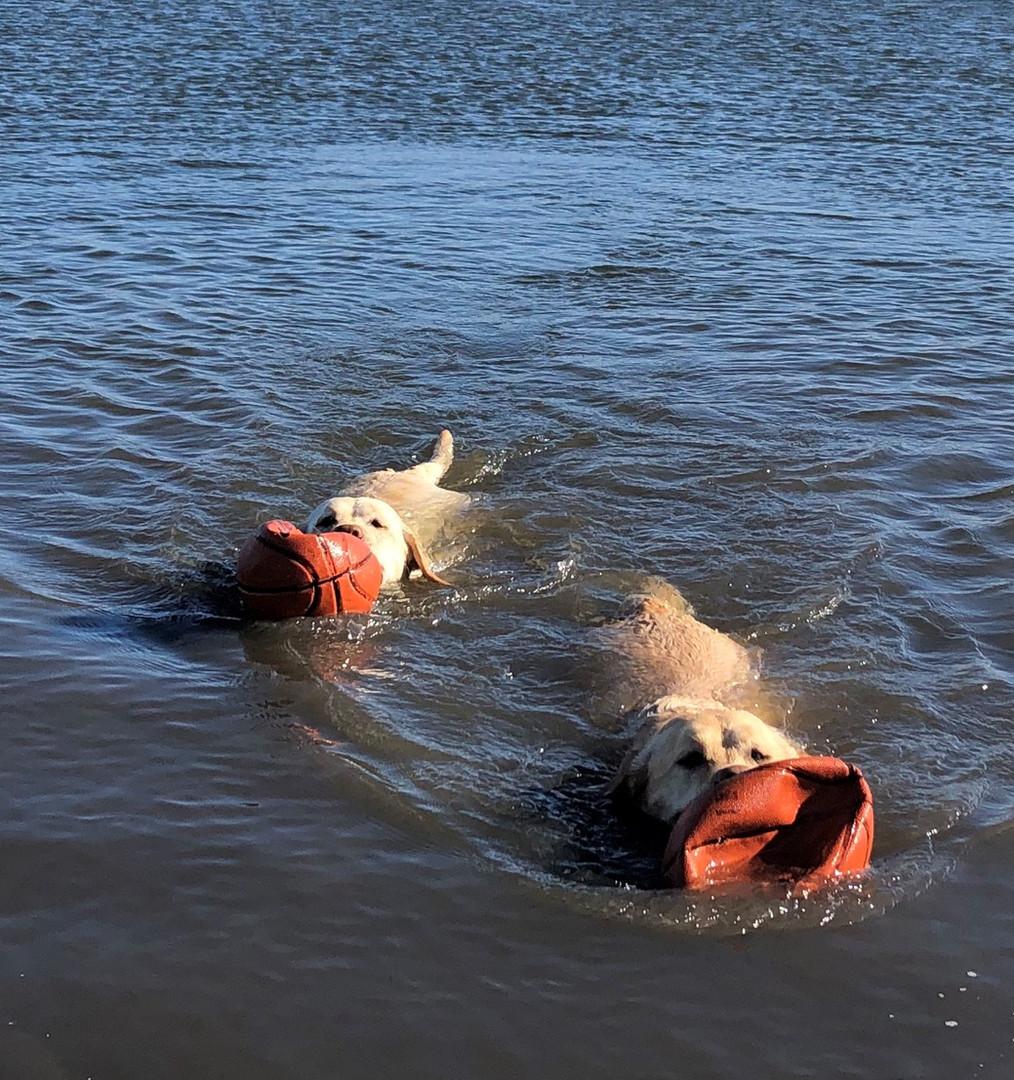 Oslo and Teeka Swim.jpg