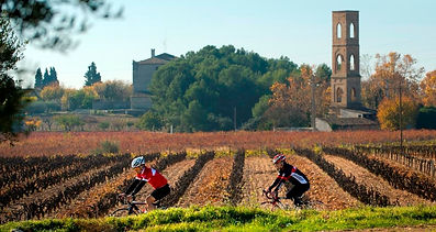 Cycling in Penedes
