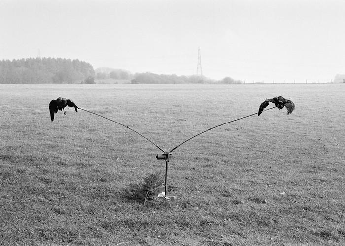 crows 10.jpg