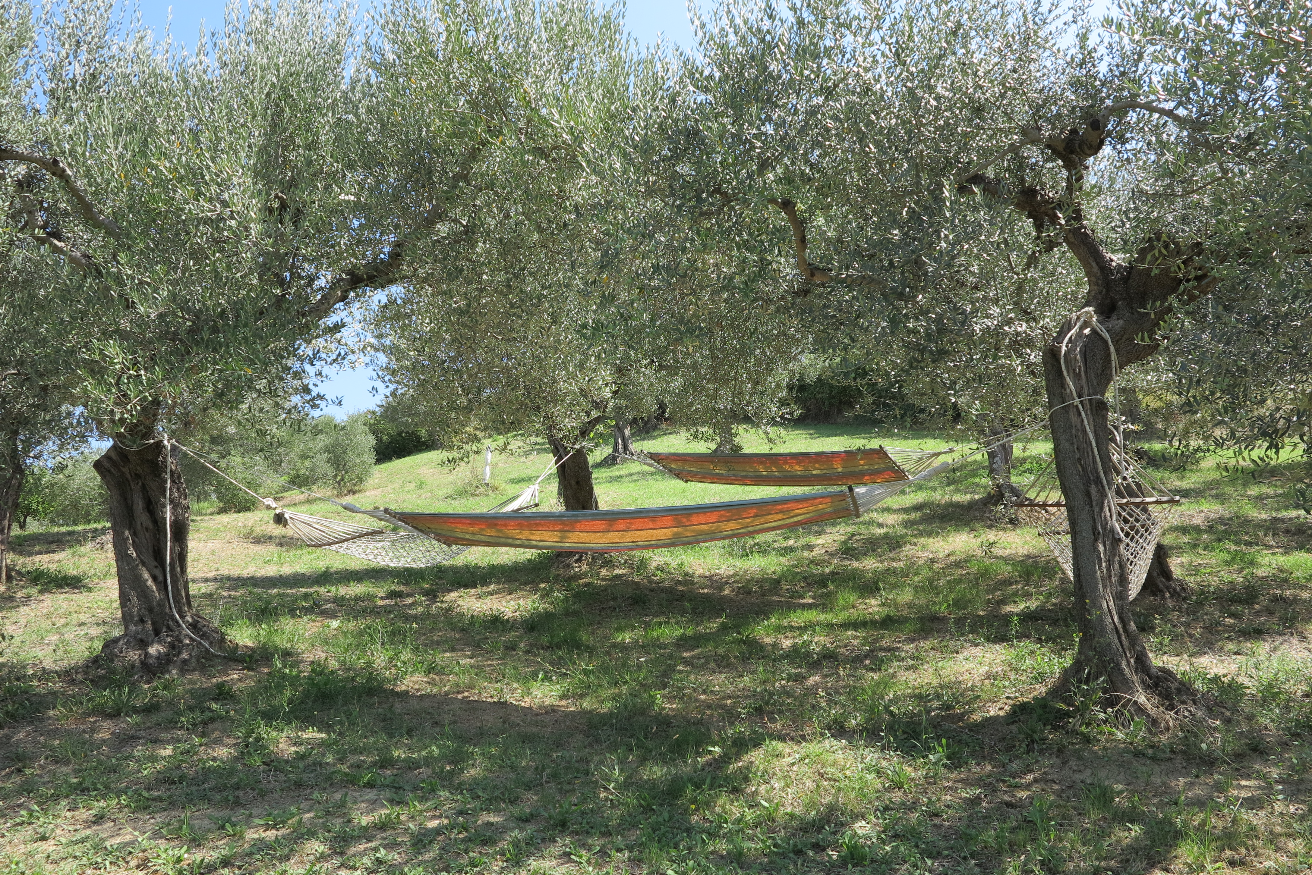 Hammocks in Our Olive Grove