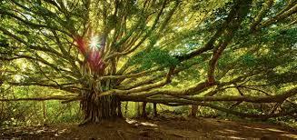 El Árbol de la Vida es un símbolo complejo