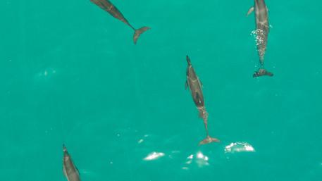 Camilla_Dellion_Drone_Maldives_0243.jpg