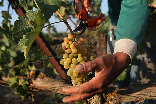 Old Vines Chenin Blanc