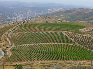 Tura Winery's New Heights