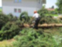 Baumfällungen, Prutting