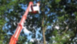 Baumpflege, Prutting