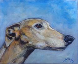 Thomas greyhound