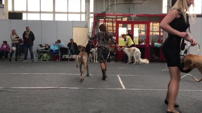 Видео любезно предоставлено сайтом http://greatdanes.dog/