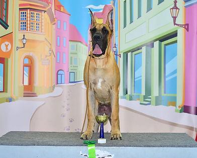 Сафи лучший щенок Голрайз 2021.jpg