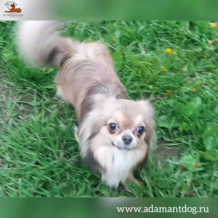 Виктори Артимат Пилот 1 год и 5 месяцев