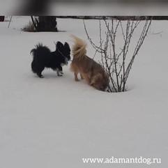 Виктори Артимат Пилот и Адамант Дог Винстон март 2020