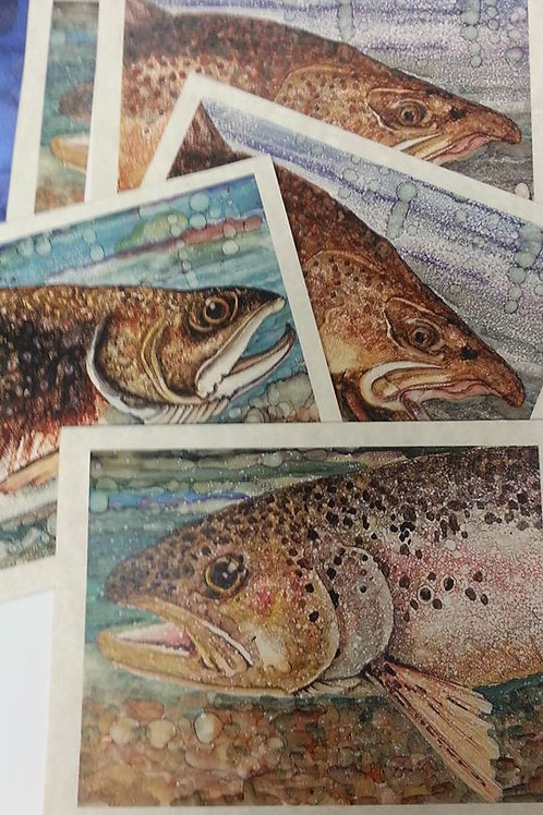6 card pack   mixed trout