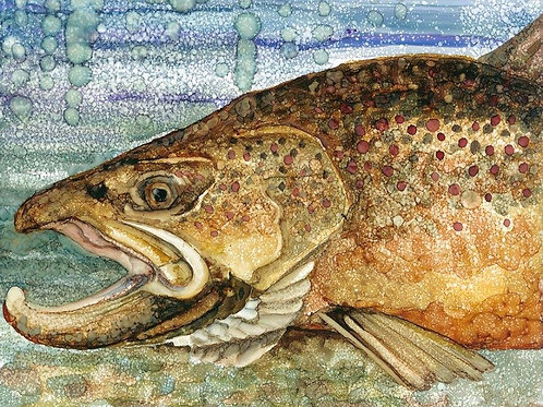 8 X 10   Brown trout, matted