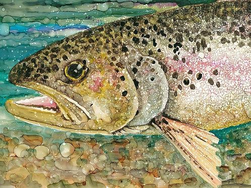 Rainbow trout                                   11 X 14 canvas