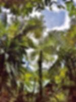 ptg-trees.jpg