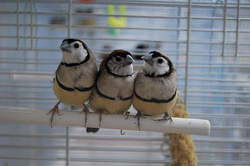 Just three peas in a pod. These cute owl