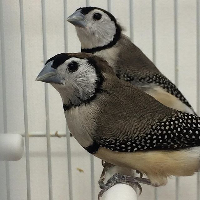 Special on owl finches originally $395 n