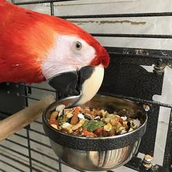 Mingo loves our Paterson Bird Store blen